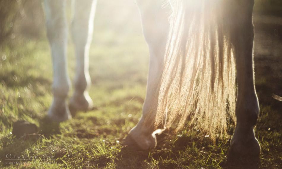 10 sesja fotograficzna plener konie Trojmiasto