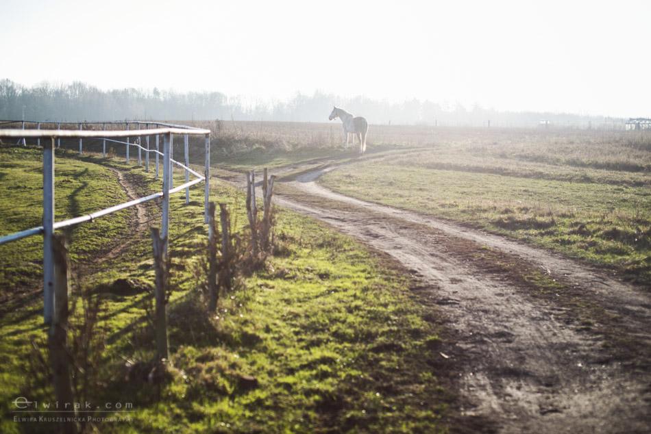 13 sesja fotograficzna plener konie Trojmiasto