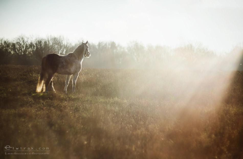 4 sesja fotograficzna plener konie Trojmiasto