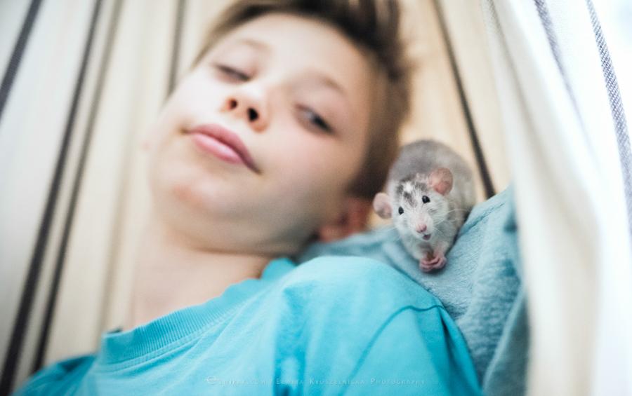 szczury rats wybieg zabawa (11)