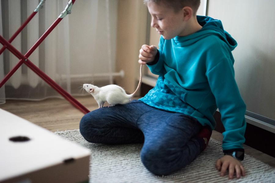szczury rats wybieg zabawa (13)