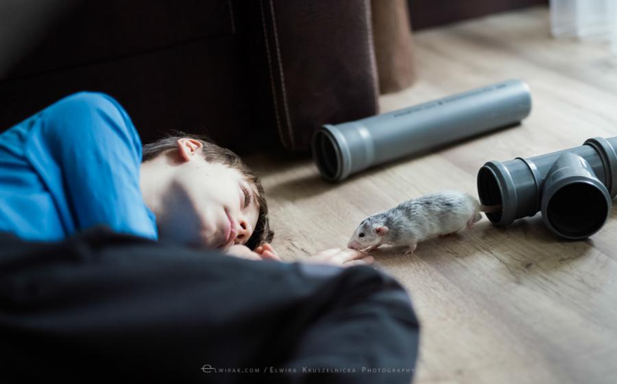 szczury rats wybieg zabawa (7)