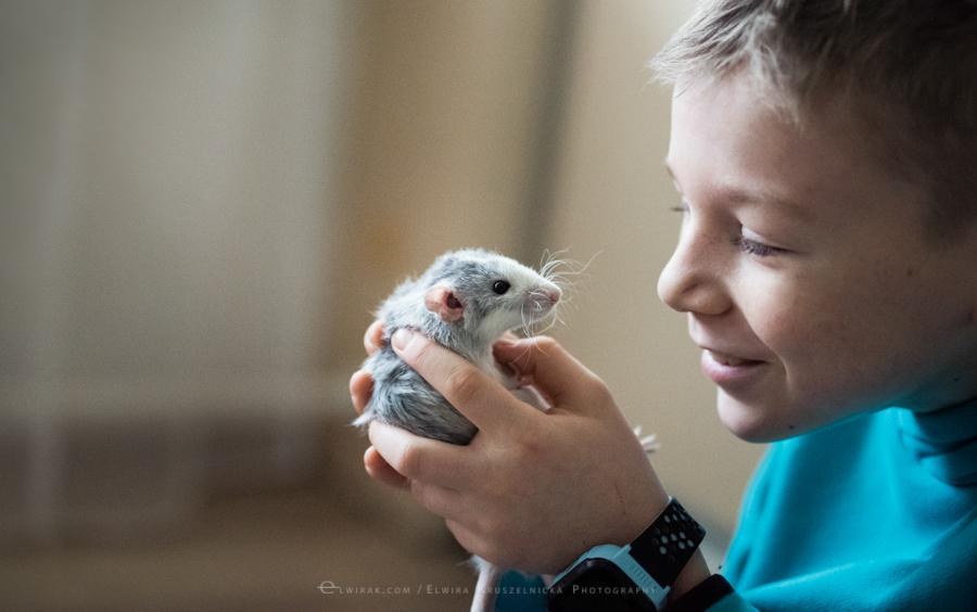 szczury rats wybieg zabawa (9)
