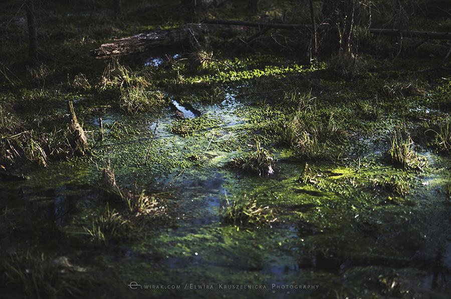 bagna zielen las natura