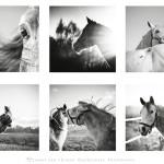 elwirak Przyklady fotografii (7) 640