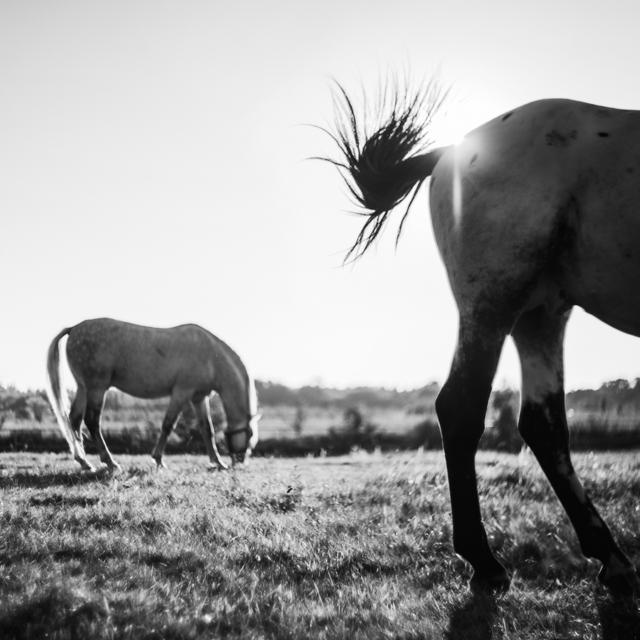 konie-kon-horse-2