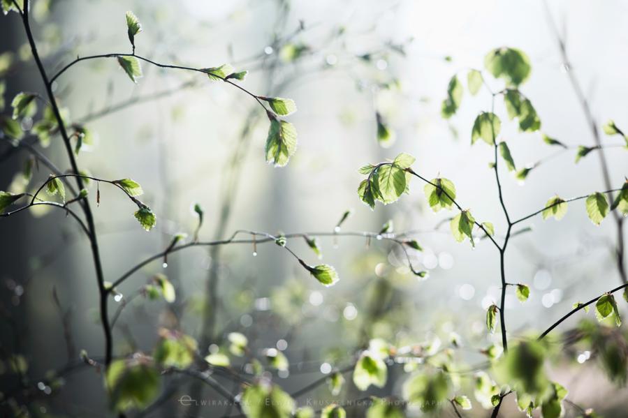las natura zielen (11)