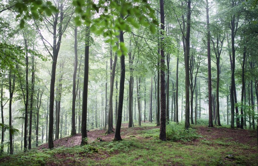 las natura zielen (13)