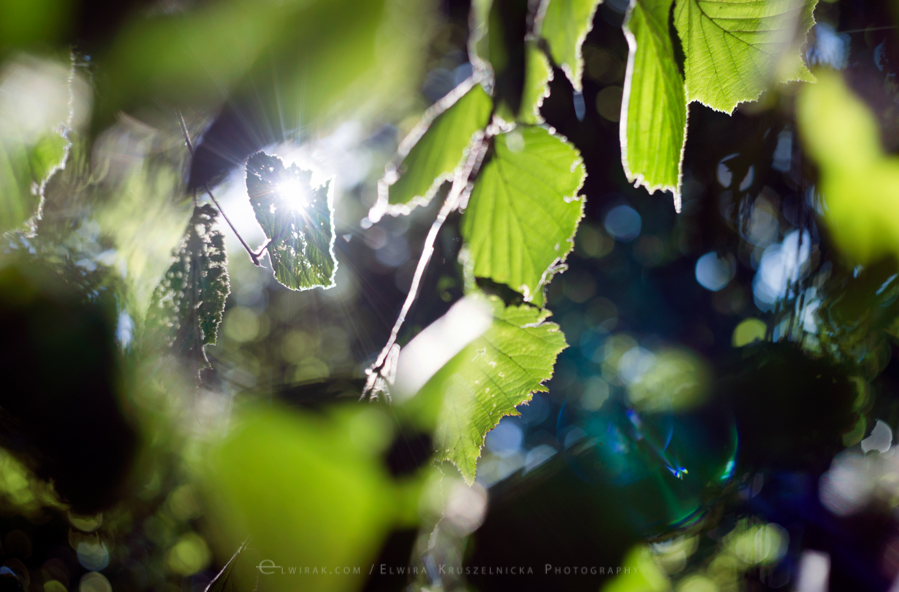 las natura zielen (14)