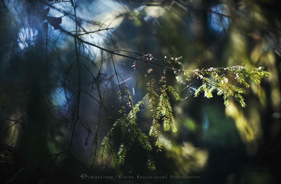 las natura zielen (15)