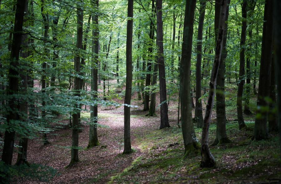 las natura zielen (17)