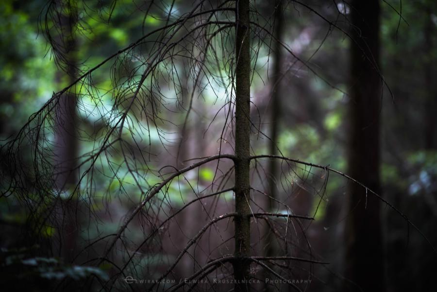 las natura zielen (18)
