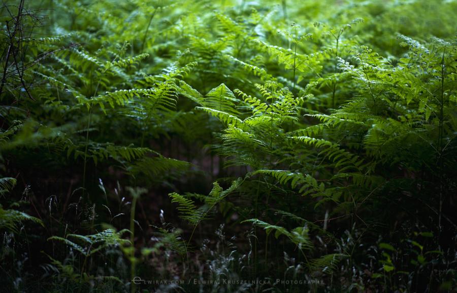 las natura zielen (19)