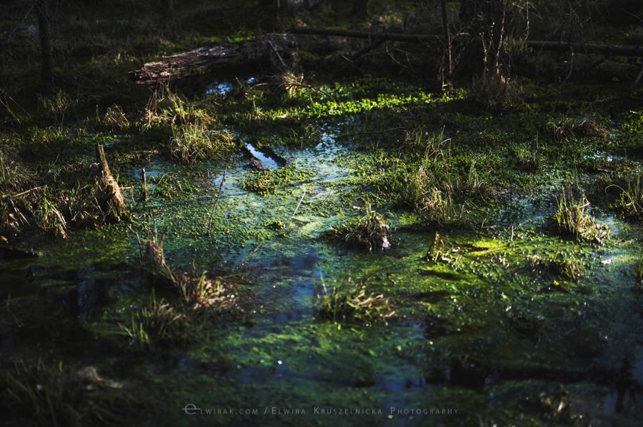 las natura zielen (2)