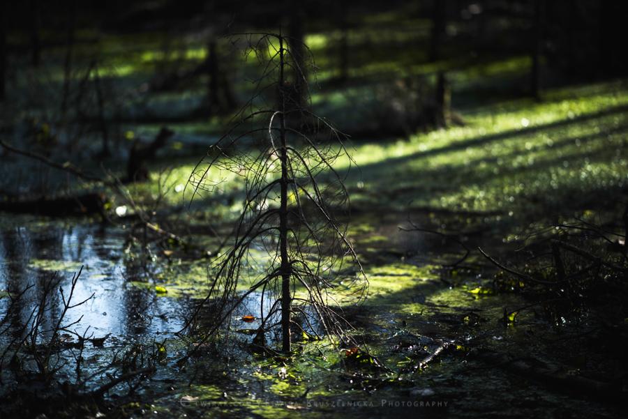 las natura zielen (20)