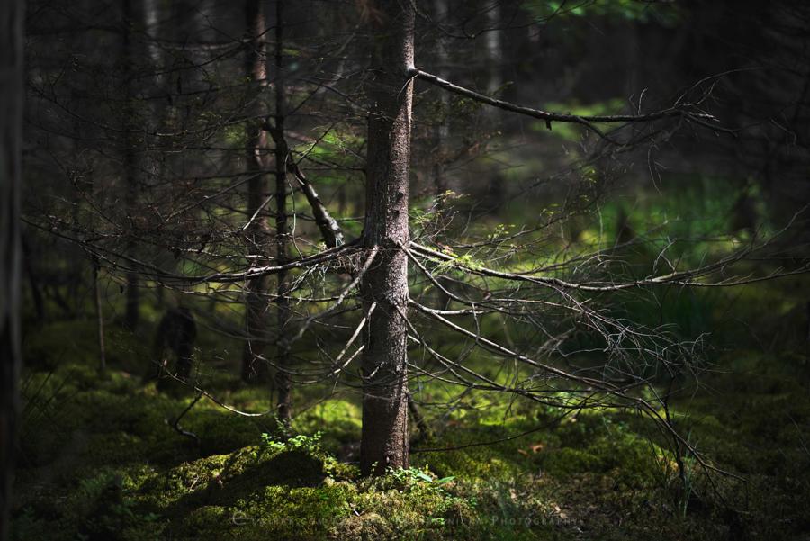 las natura zielen (21)
