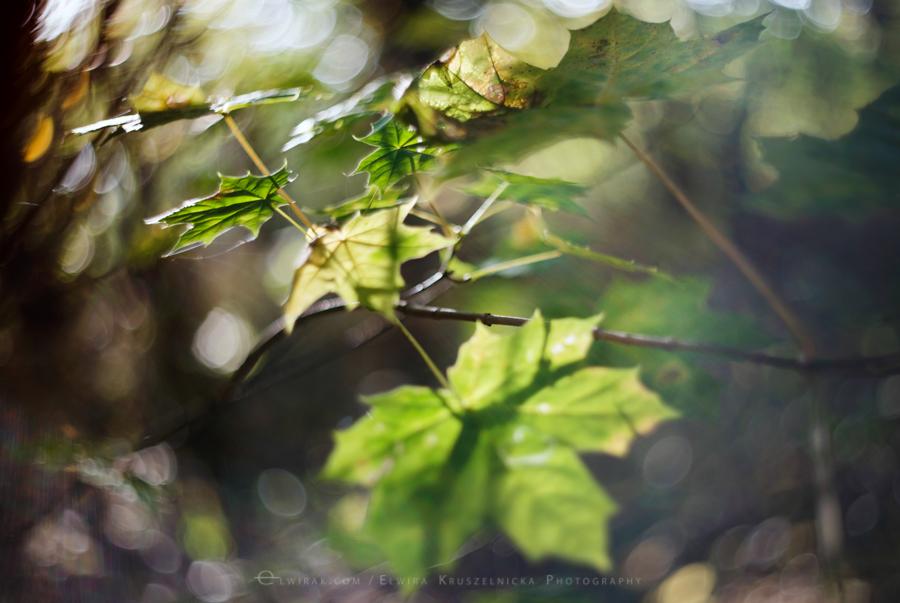 las natura zielen (22)