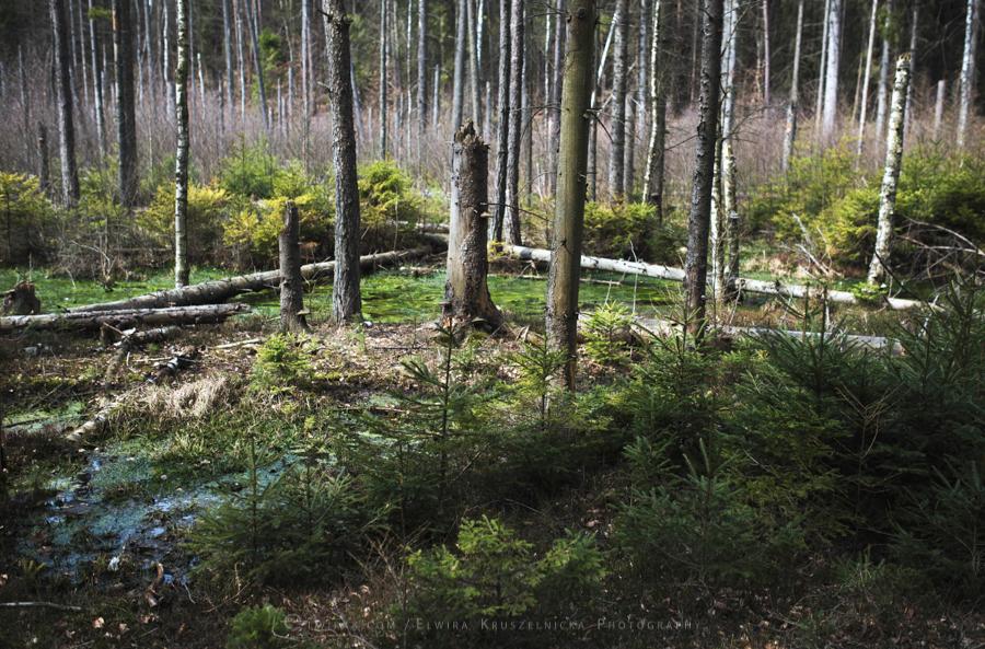 las natura zielen (23)
