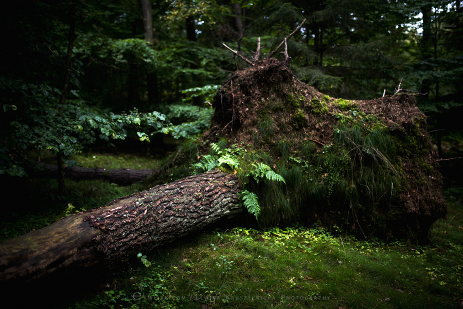las natura zielen (27)