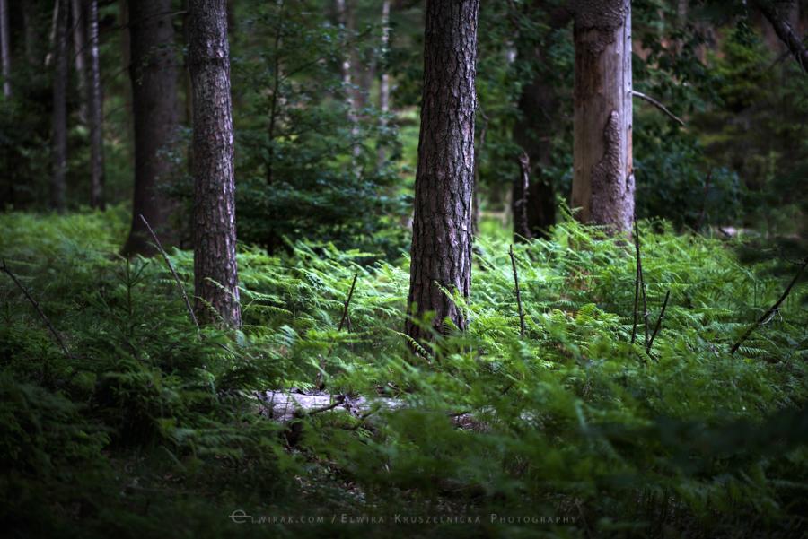 las natura zielen (28)