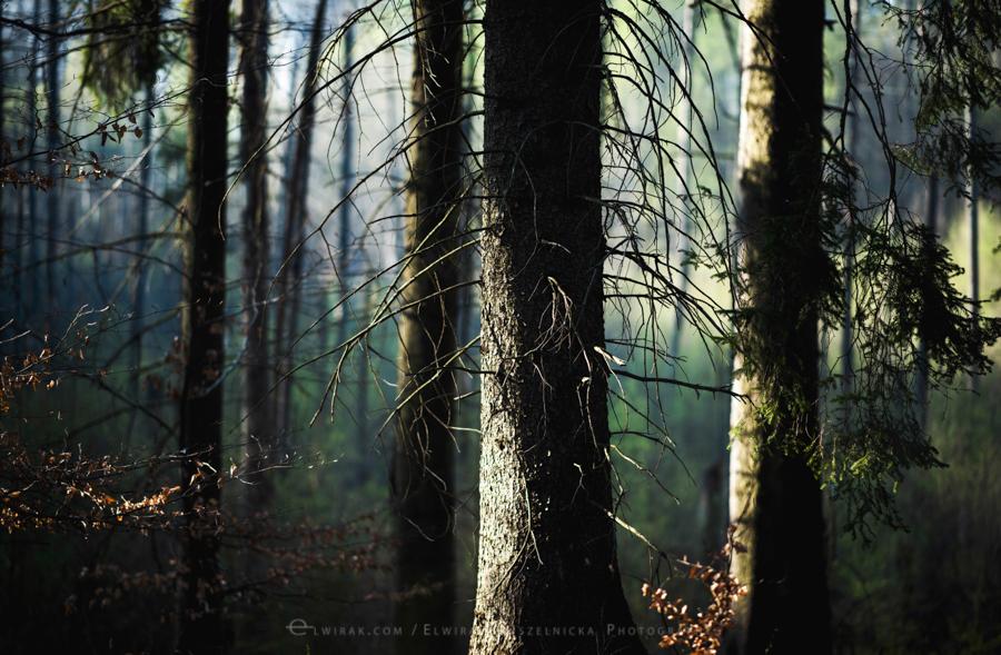 las natura zielen (3)