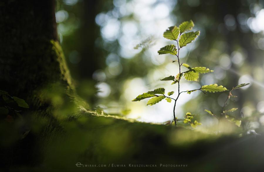 las natura zielen (4)