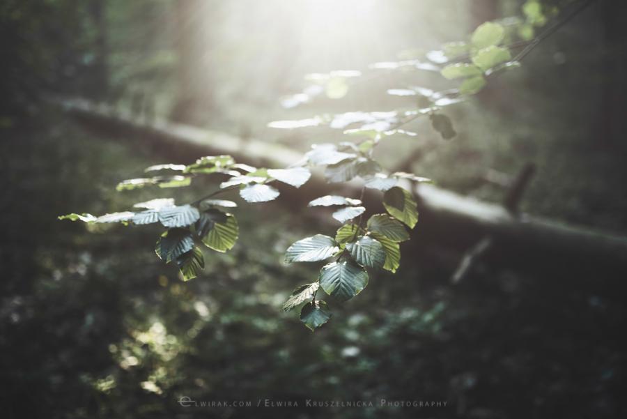 las natura zielen (6)