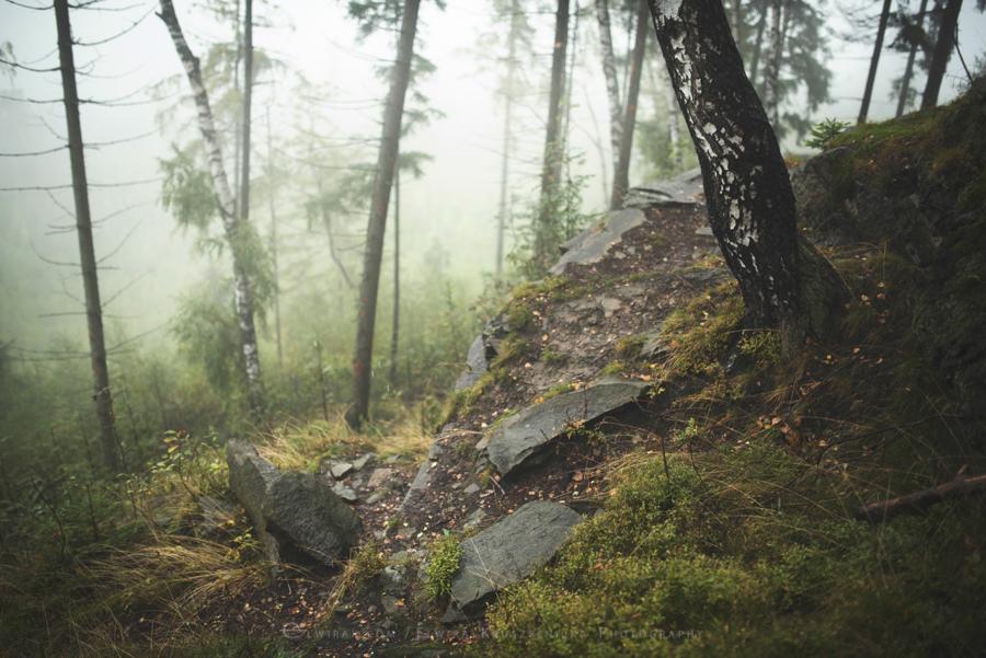 las natura zielen (7)