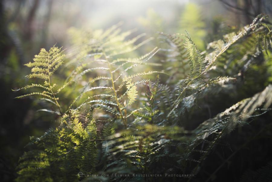 las natura zielen (8)