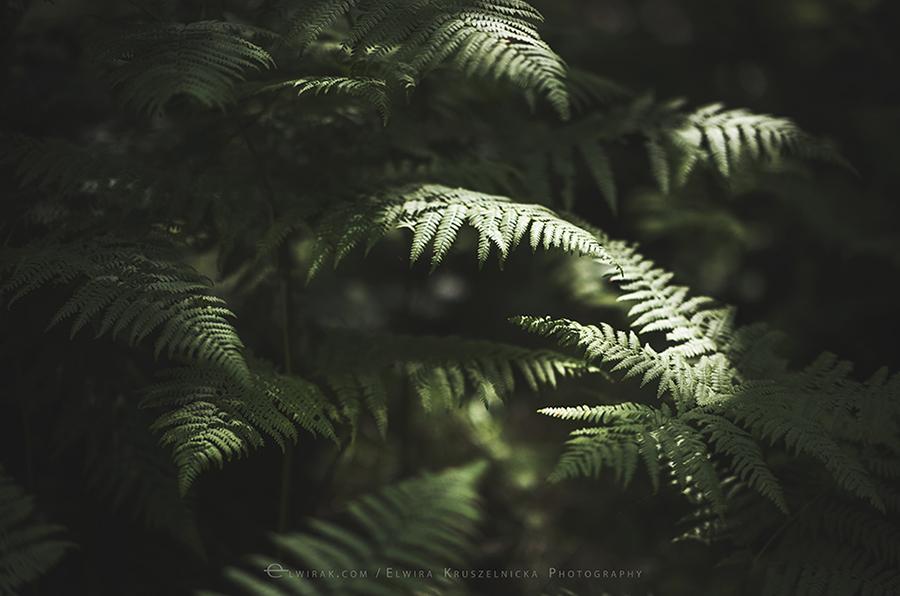 paprocie natura zielen fotografia artystyczna