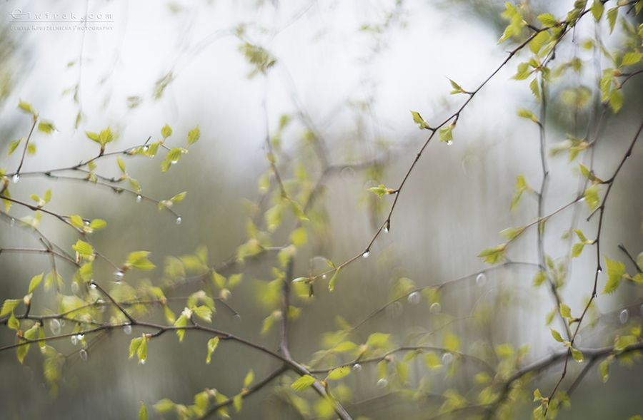wiosna deszcz wiosenny krople fotografie natury