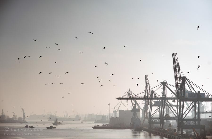 gdynia-port-stocznia-dzwigi-trojmiasto