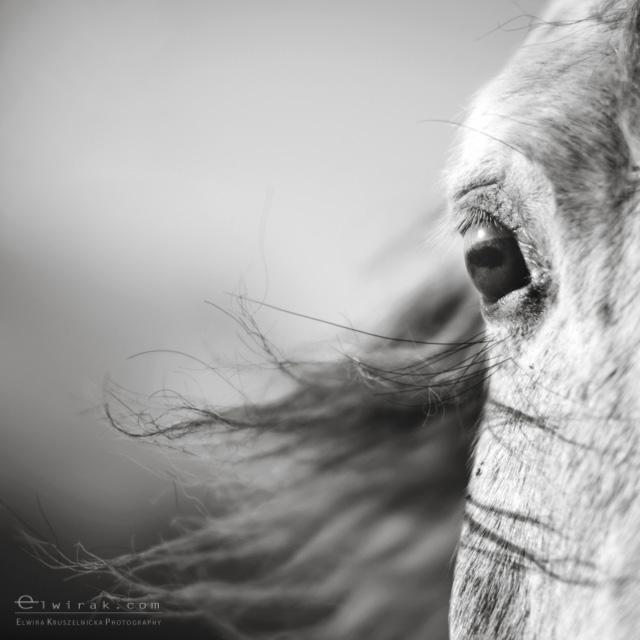 1 konie zdjecia artystyczne horses