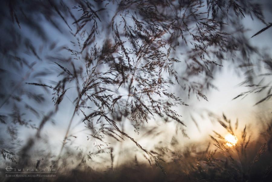 1 wiosna lato jesien natura liscie łąki