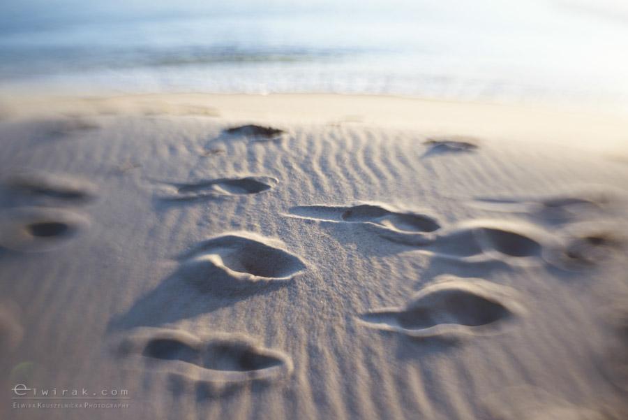 1 zdjęcia fotografie artystyczne nadmorskie trawy