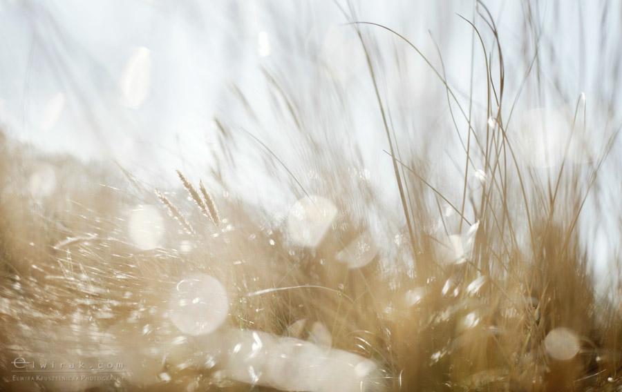 10 wiosna lato jesien natura liscie łąki
