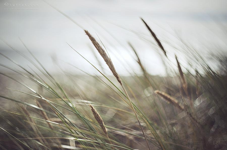 11b-zdjecia-fotografie-artystyczne-nadmorskie-trawy