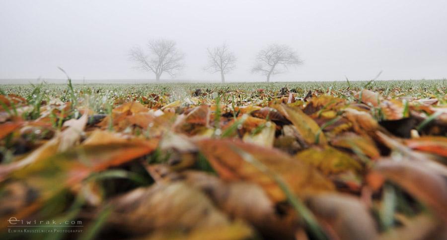 12 wiosna lato jesien natura liscie łąki