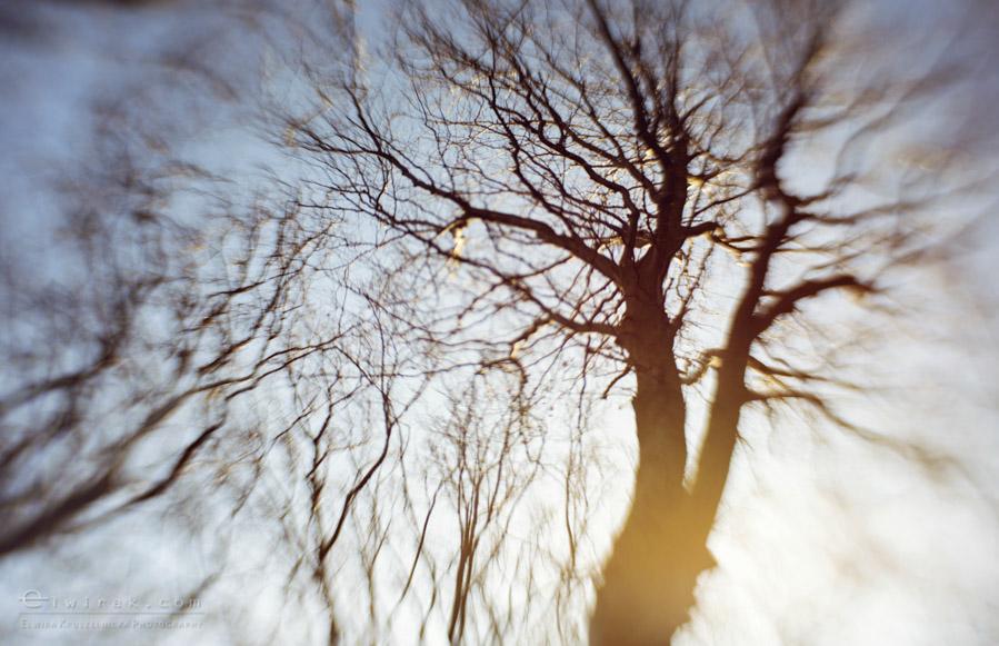 13 wiosna lato jesien natura liscie łąki