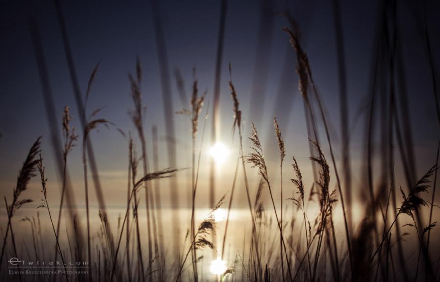 15 wiosna lato jesien natura liscie łąki