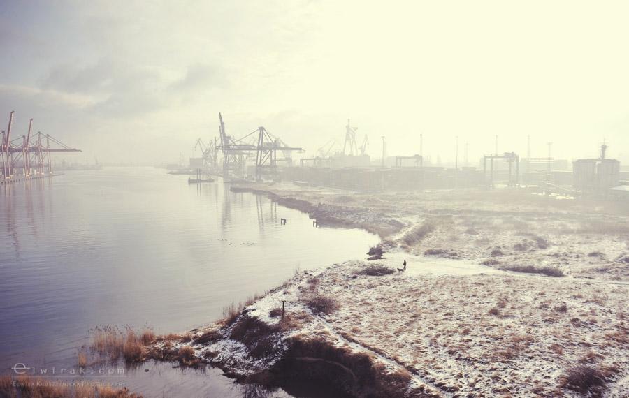 15 zdjęcia fotografie artystyczne nadmorskie trawy