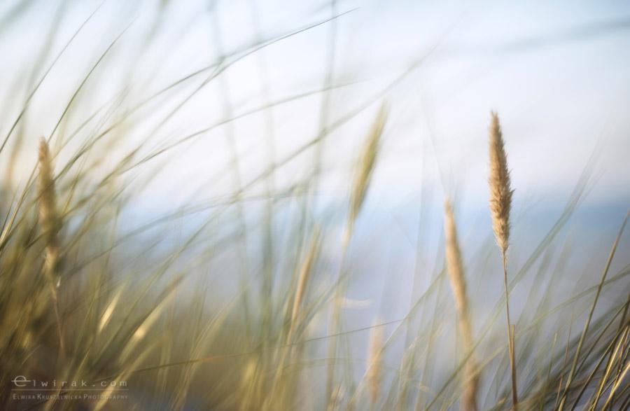 17 zdjęcia fotografie artystyczne nadmorskie trawy