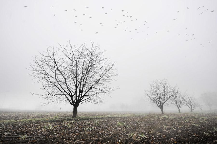 18 wiosna lato jesien natura liscie łąki