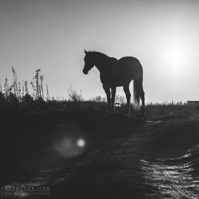 2 konie zdjecia artystyczne horses