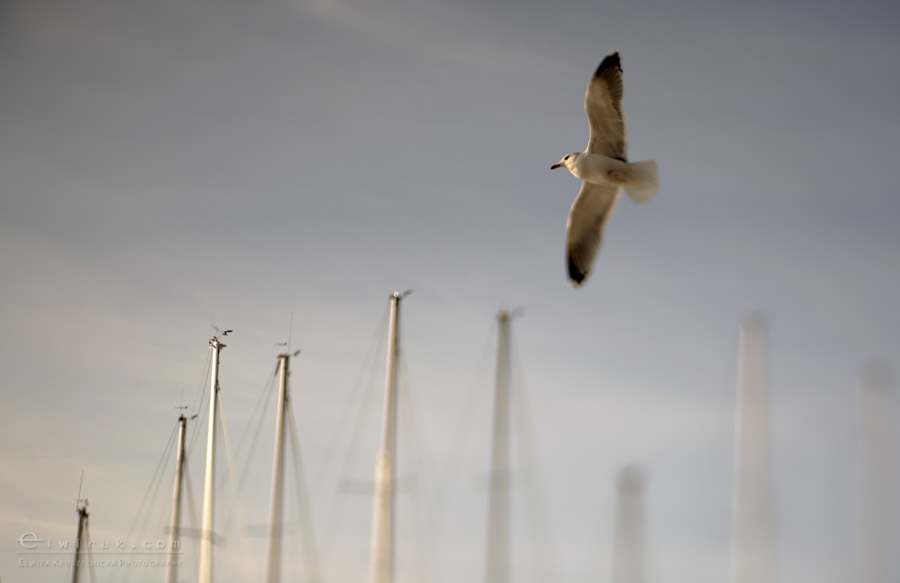 2 zdjęcia fotografie artystyczne nadmorskie trawy