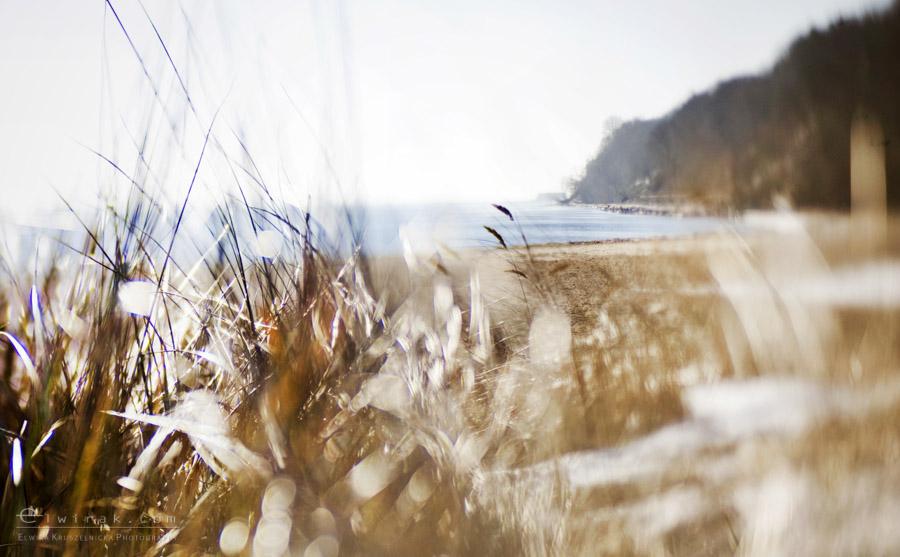 21 zdjęcia fotografie artystyczne nadmorskie trawy