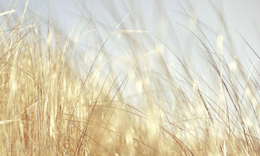 21b zdjęcia fotografie artystyczne nadmorskie trawy