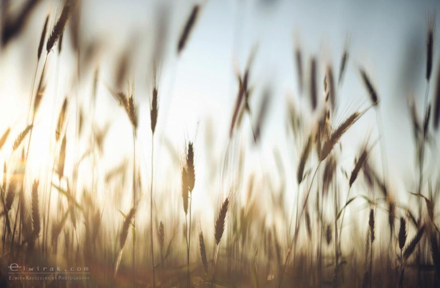 22 wiosna lato jesien natura liscie łąki