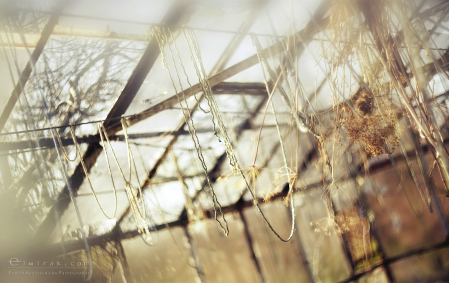 23 wiosna lato jesien natura liscie łąki