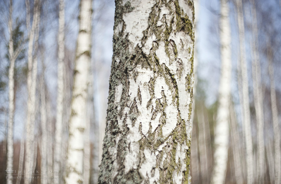 24 wiosna lato jesien natura liscie łąki